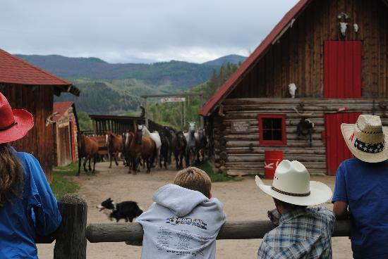 Granby, CO: Putting the horses to pasture for the night - amazing to watch