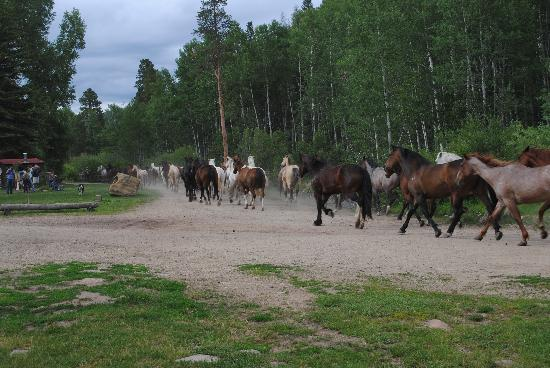 Granby, CO: Horses going nighty night