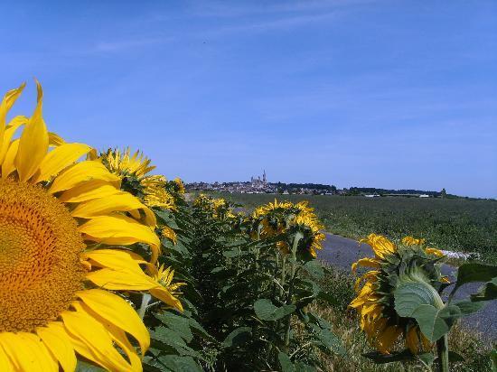 La Grande Maison d'Arthenay: Sunflowers in July