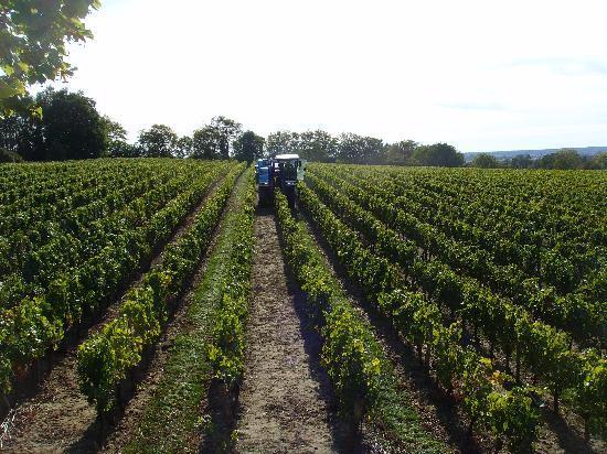 La Grande Maison d'Arthenay: Harvest Time