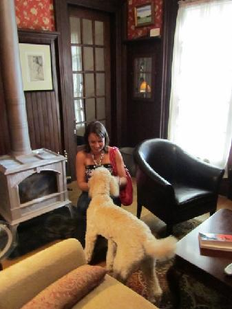 Lackawanna B&B: Fun with Lily the poodle!