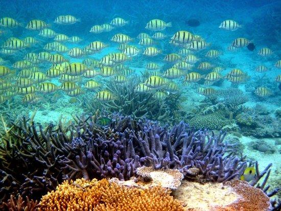 Nanuya, Fiji: Coral reef scene.