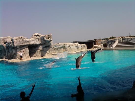 Riccione, Italy: spettacolo alla laguna dei delfini