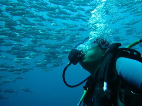 Amed Scuba Tauchzentrum: Makrelen Tornado über dem Liberty Schiffswrack