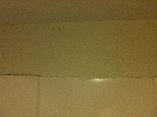 Garden Plaza Hotel Gatlinburg: Mold in the bathroom shower