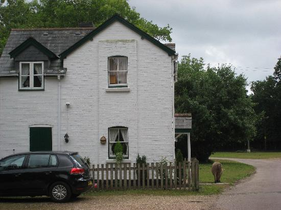 Wych Green Cottage: The Cottage