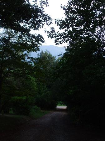 แบล็คเมาท์เทน อินน์: Looking down the driveway!