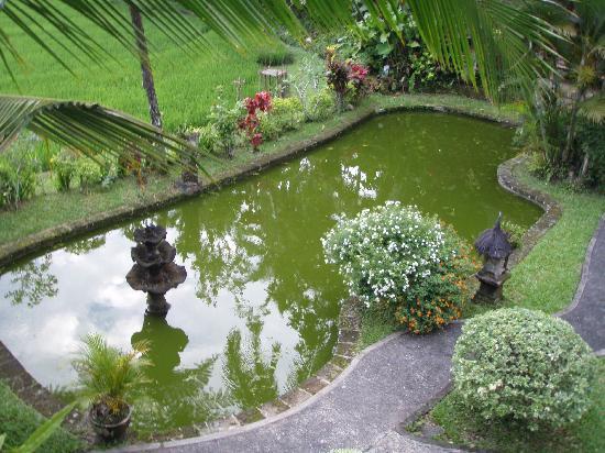 Cempaka Belimbing Villas: Lago del hotel