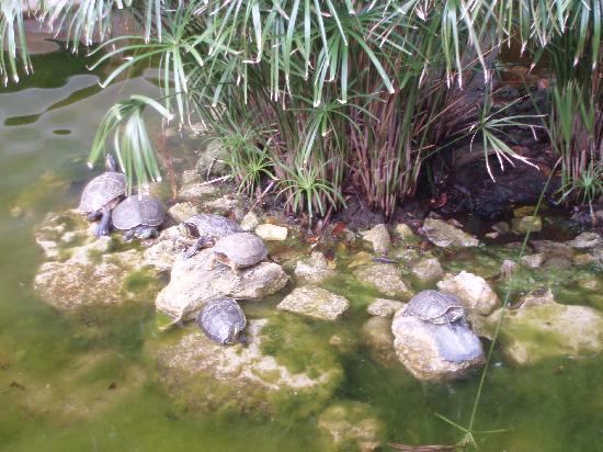 Iberostar Tucan Hotel: Jardin zoologique de l'hôtel