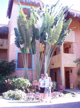 Iberostar Tucan Hotel: Vue de notre bâtiment