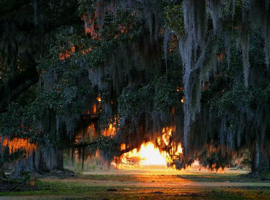 Mandeville, LA: Sunset through Live Oaks