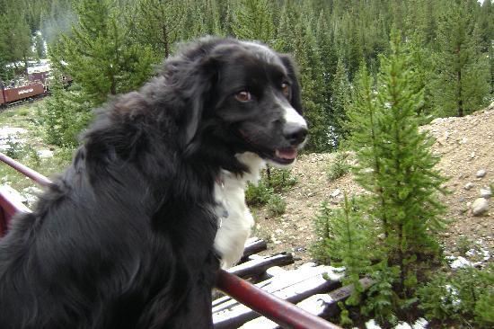 Leadville, Colorado & Southern Railroad: Annie Takes a Ride!