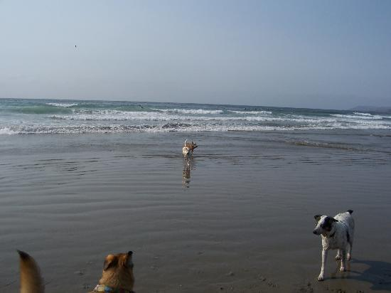 Morro Strand State Beach: Morrow Bay where all dogs are allowed