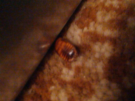 Holiday Inn Express Sierra Vista: Another view of the bug found