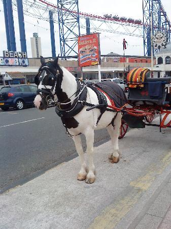 Jesmond Dene Hotel: Horse