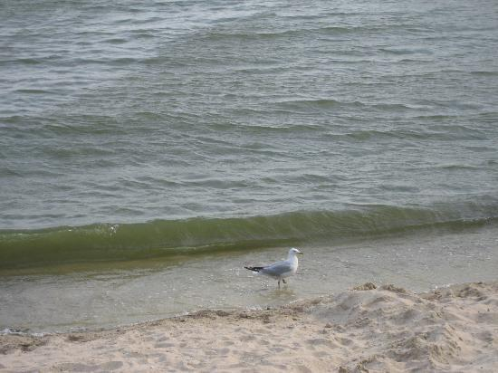 Marblehead, OH: The beach