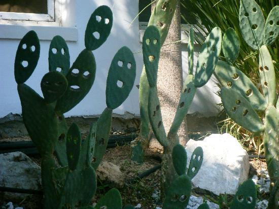 Napa Mermaid Hotel and Suites: smiling cacti