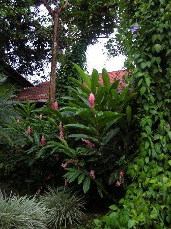 Santa Teresa, Costa Rica: Lush and green
