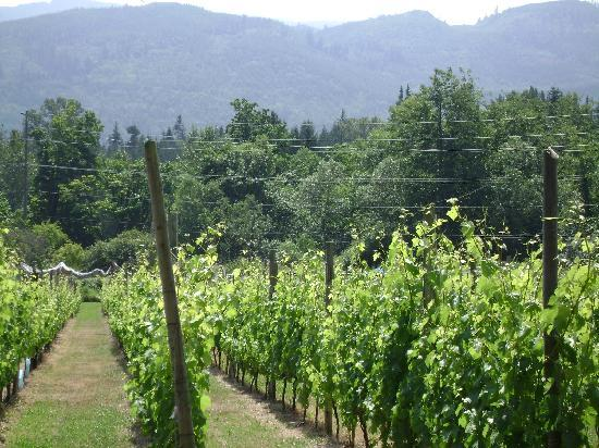 Tree Frog Night Inn: Wine Tasting at Mount Baker Winery