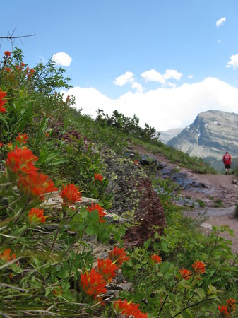 Photo of Many Glacier Campground Glacier National Park