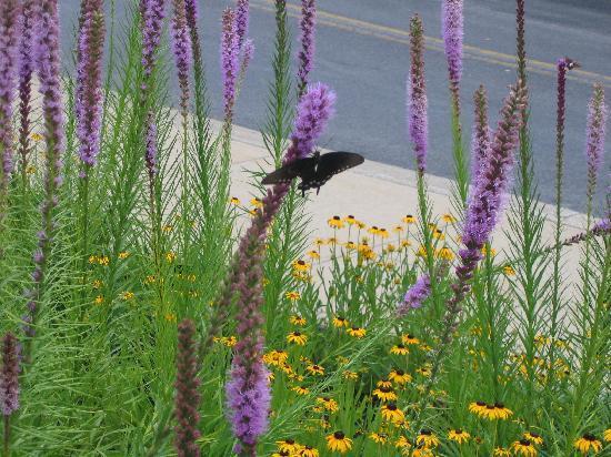 Pipestem State Park : Butterfly Season