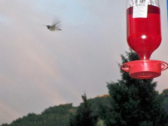 Terrace Towers Lodge: hummingbirds everywhere