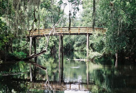 Hillsborough River State Park: This beautiful scenic park is a great place to visit
