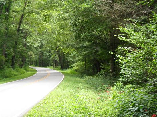 Pisgah Forest, Kuzey Carolina: Beautiful tree-lined roads