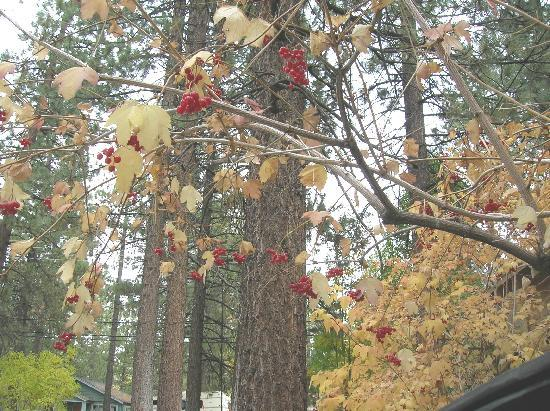 Sleepy Forest Cottages: Fall colors & berries
