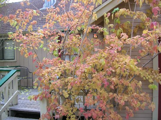 Sleepy Forest Cottages: Fall multi colored tree on porch of 1 bedroom cottage