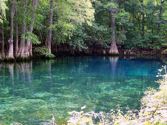 Chiefland, FL: beautiful Manatee Springs