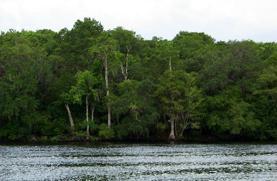 Manatee Springs State Park: Historic Suwannee River