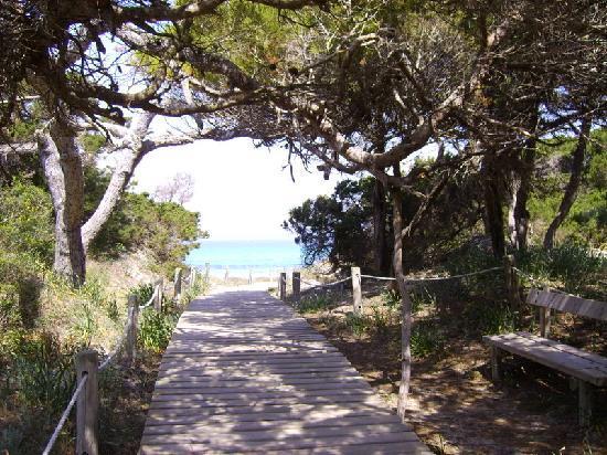 Hotel Riu La Mola : Weg zum Strand