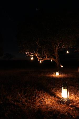 Londolozi Varty Camp: lights set up in the bush for cocktails