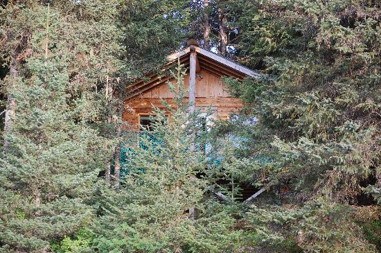 Seaside Adventure Cabins: our hidden cabin