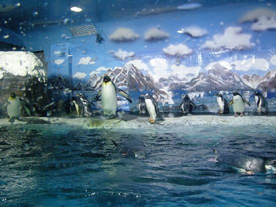 Laohutan Scenic Park: penguin enclosure