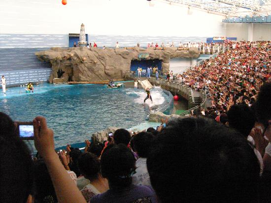 Laohutan Scenic Park: Dolphin Show