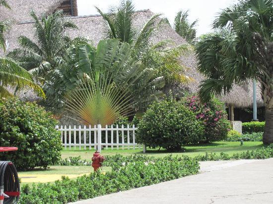 Punta Cana, Dominikanische Republik: B e a u t i f u l............