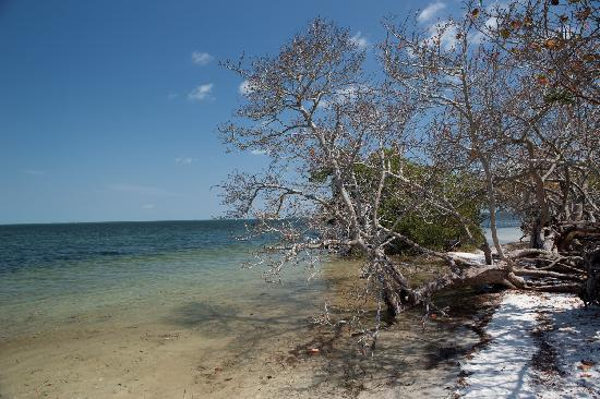Palmetto, FL: Emerson Point Preserve