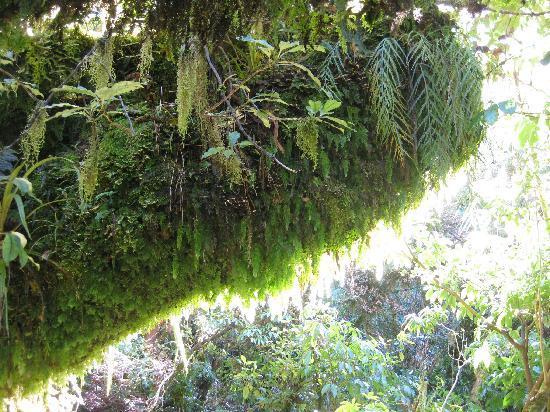Dawson Falls Walk