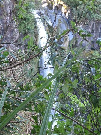 Dawson Falls: Dawson Falls