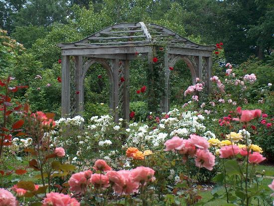 Annapolis Royal Historic Gardens: Rose Arbour