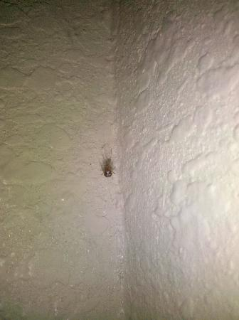 Days Inn by Wyndham Chattanooga Lookout Mountain West: Small spider near door