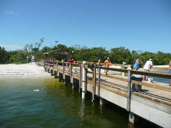 Parrot Nest: The pier
