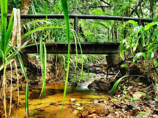 Dunk Island Holidays: Rainforest Creek At Bingil Bay, Mission Beach