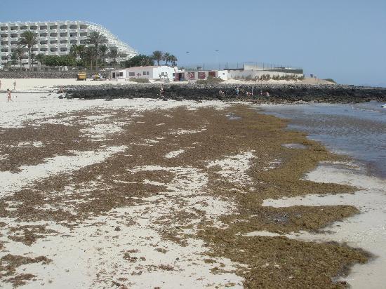 Lobosol Paradise Apartments : mucillagine sulla spiaggia