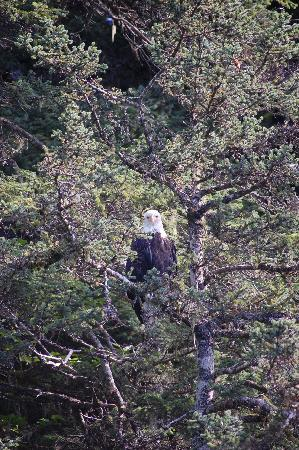 Seaside Adventure Cabins: one of several eagles we saw