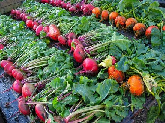 Honesdale, Pensilvania: Beets to take home!