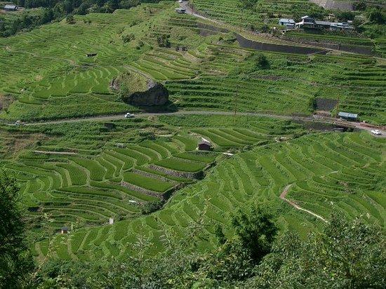 Kumano, Japan: 夏の千枚田