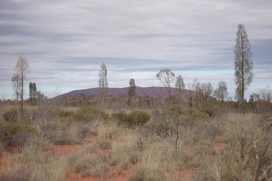 View of Ayers Rock from the campground